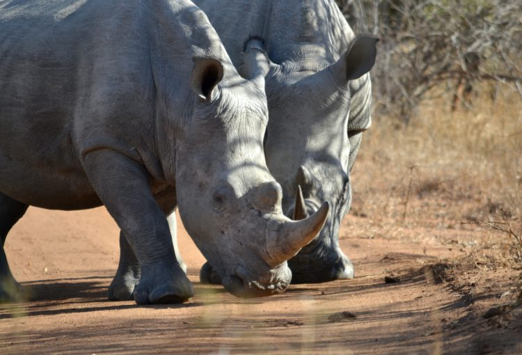 donate to wildlife in africa